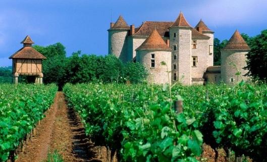 Vineyard Cahors LotValley France1
